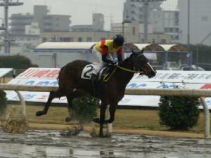 チューリップ特別優勝 タッチブライト 岡田大騎手