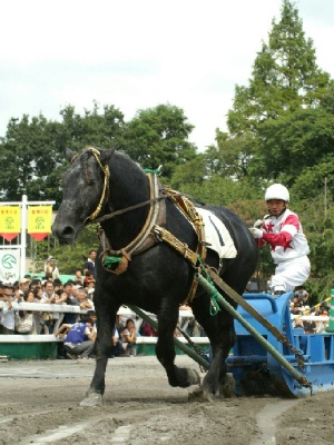 トカチダケと山本正彦騎手