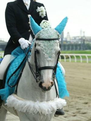 川崎の誘導馬6月紫陽花 昼Ver5
