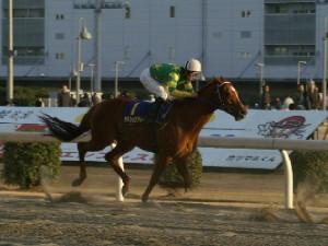 川崎所属馬 最先着はカネショウアトラス