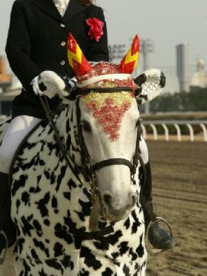 川崎競馬の誘導馬 カゥくん ユーちゃんVer3