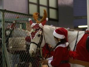 川崎競馬の誘導馬 ファンサービス中 1