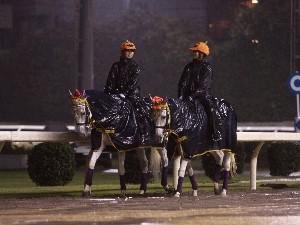 川崎競馬の誘導馬 10月はハロウィン