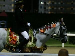 川崎競馬の誘導馬 10月もみじVer 4