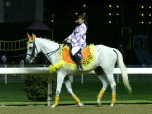 川崎競馬の誘導馬 8月前半 ひまわり 夜Ver3