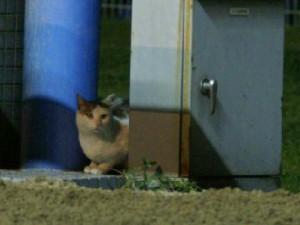 川崎競馬場の猫-090415-1-拡大