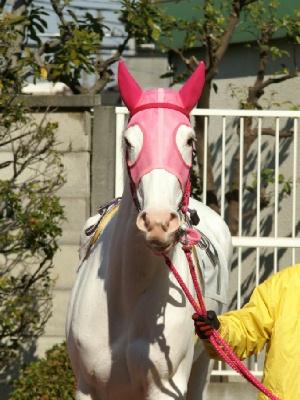 白馬の遺伝子-090127-5