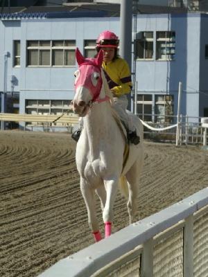白馬の遺伝子-090127-7