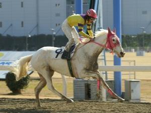 白馬の遺伝子-090127-9