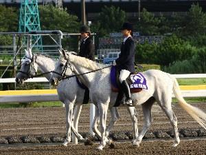 船橋競馬の誘導馬 3