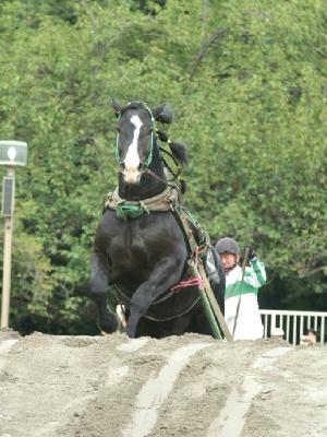 障害 シクノヘプリンスと安部憲二騎手