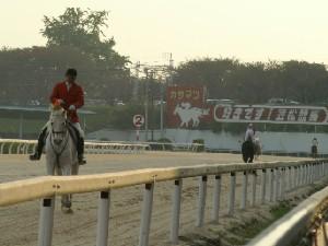 091030 日本最高齢誘導馬 パクじぃは今日も元気でした。