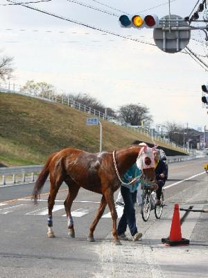 これぞ本当の馬優先