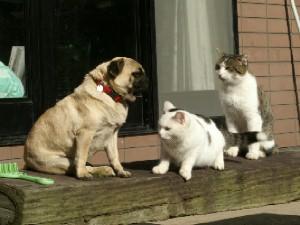 パグちゃんから猫ファミリーに話を…