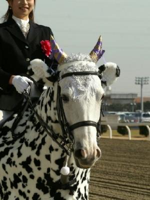川崎の誘導馬 カゥくん トーチくんVer 5
