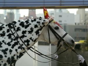 川崎競馬の誘導馬 カゥくん ユーちゃんVer4