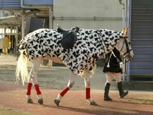 川崎競馬の誘導馬 カゥくん ユーちゃんVer5