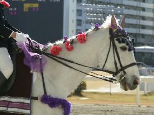 川崎競馬の誘導馬 1月後半開催 平場Ver トライアンフトーチ 2