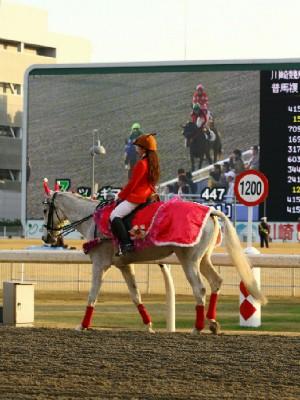 川崎競馬の誘導馬 12月開催 xmas 平場Ver ジョイくん 2