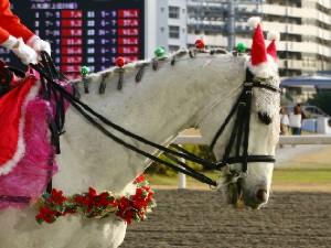 川崎競馬の誘導馬 12月開催 xmas平場Ver トーチくん 4