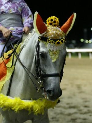 川崎競馬の誘導馬 8月前半 ひまわり 夜Ver4
