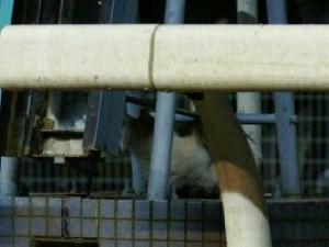 川崎競馬場の猫-090415-2-拡大