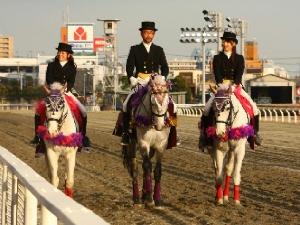 川崎記念は誘導馬 3頭立て