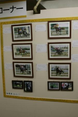 アラブの年度代表馬の展示