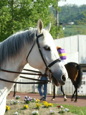 旭川競馬場の誘導馬2