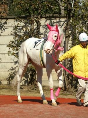 白馬の遺伝子-090127-1