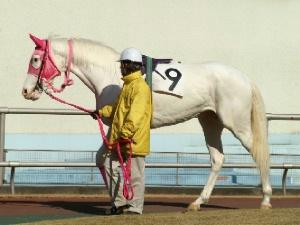 白馬の遺伝子-090127-3