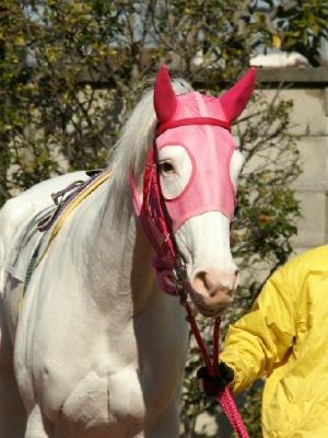 白馬の遺伝子-090127-6