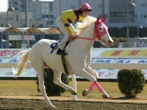 白馬の遺伝子-090127-8